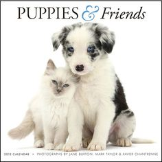 Puppies & Friends Wall Calendar: The Puppies & Friends Calendar is different: unlike other dog calendars, it features puppies paired in interesting combinations with adorable baby animals and unusual critters—kittens and cats, bunnies, guinea pigs, even a duck!  $13.99  http://calendars.com/Puppies/Puppies-and-Friends-2013-Wall-Calendar/prod201300000967/?categoryId=cat00339=cat00339#