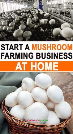 Organic Gardening, Gardening Tips, Organic Farming, Home Vegetable Garden, Vegetable Farming, Veggie Gardens, Growing Mushrooms At Home, The Farm, Farm Business