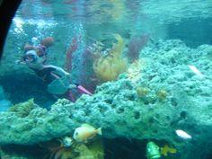 Review of Finding Nemo Submarine Voyage at Disneyland