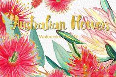 Australian flowers watercolor by LABFcreations on @creativemarket