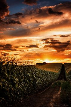 Clouds ➖➖➖➖➖➖➖➖➖ Weather ➖➖➖➖➖➖➖➖➖ Color ➖➖➖➖➖➖➖➖➖ Swirl ➖➖➖➖➖➖➖➖➖ Phenomena ➖➖➖➖➖➖➖➖➖ Sunrise ➖➖➖➖➖➖➖➖➖ Sunset ➖➖➖➖➖➖➖➖➖ Golden corn field by Aaron Toulmin on Beautiful Sunset, Beautiful World, Beautiful Places, Beautiful Pictures, Art Et Nature, Nature Photos, Country Life, Country Roads, Country Charm