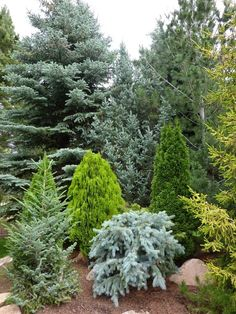 There are at least 12 different conifers in this photo! See how different they are in color, form (shape) and texture (the actual needles or leaves). Imagine spacing these evergreens around your property, in small groups with other complimentary shrubs and flowers. Good-bye boring lawn!  ~The garden: Conifer Gardens #smallgardenshrubs
