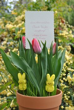 Angenuity my favorite easter gift easter egg planter gardening jac o lyn murphy negle Choice Image