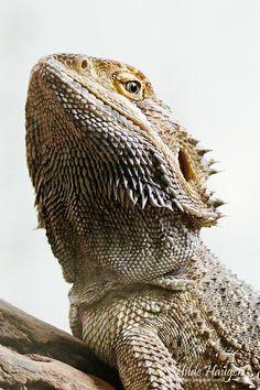 Hola! Soy Lizardo Lizard. Mi amorcito es un iguana!