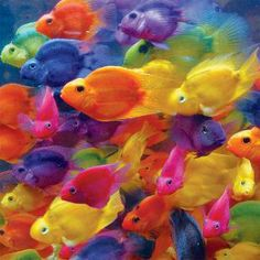 Schooled in Color, a 500 piece jigsaw puzzle by Springbok Puzzles.