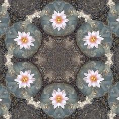 Peyote mandala - lol, this is what you see when you take peyote...