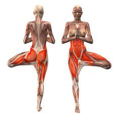 Tree pose, hands in Namaste extended forward, left support - Vrikshasana advanced left - Yoga Poses | YOGA.com