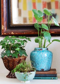 "Plants grouped together throughout the house. ""They look so striking in masses, and if you mix up the groups with various containers it gives that spot a bit of texture."""
