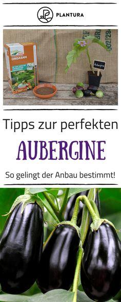 Verena Unterberg (nudelzwerg) auf Pinterest