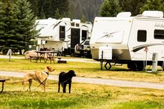 Pet friendly in West Yellowstone