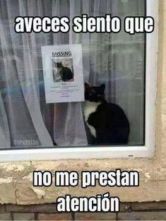 No Me Prestan Atención #ImagenDelDia