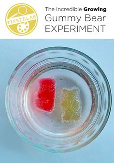 Do you know about the growing gummy bear experiment? It takes very little room, isn't messy, and your kids love it!