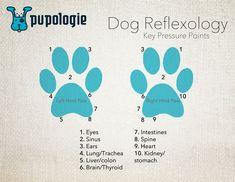 A simple foot chart. Coconut Oil Dogs Skin, Chakras, Reflexology Points, Dog Anatomy, Animal Reiki, Dog Insurance, Baby Goats, Healthy Pets, Pet Life
