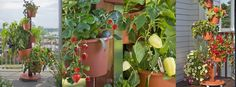 "Garden Post from ""My Garden Post"""
