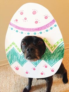 Easter photo props for dogs rabbit photoshoot Easter Rabbit Photo Prop for Dogs Dog Easter Eggs, Puppy Playground, Dog Calendar, Rabbit Photos, Easter Pictures, Holiday Pictures, Dogs And Kids, Pet Costumes, Dog Photography
