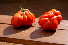 MONIKA CHODYNA: Amore pomidore