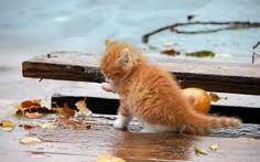 Znalezione obrazy dla zapytania girl with orange cat
