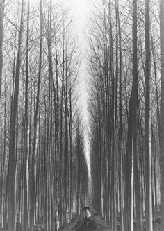 come with me, into the trees