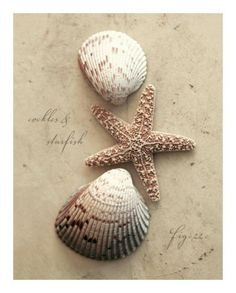 ~ Cockles & Starfish ~