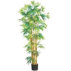 5 Ft Multi Bambusa Bamboo Silk Tree