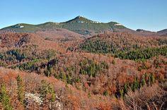 Gozdni rezervat Snežnik in vrh Snežnika.na Unescovem seznamu