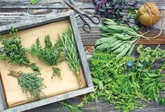 Directory of Culinary and Medicinal Herbs - Real Food - MOTHER EARTH NEWS