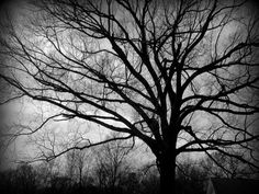 Bare Trees, Fine Art Photography, Nature Photography, Landscape Photography, Black and White