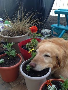 Missing my Prince helping me plant flowers!