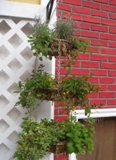 Hanging basket herb garden!