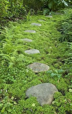 Moss garden path oh love the exsposed rock with a good inch or two of soft growing moss ♡