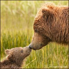 Beary Affectionate ♥