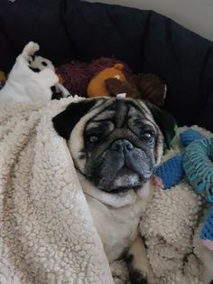 Grumble Of Pugs, Laundry, Laundry Room, Laundry Rooms