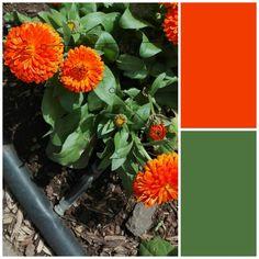 Naranja intenso y verde helecho (8)