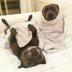 Woofland - Dog couples - Αστείες φωτογραφίες σκύλων με το ταίρι τους 1