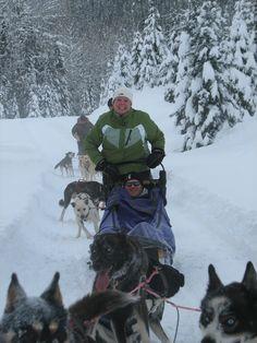 dog sledding fun