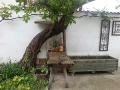 Tree life Outdoor Furniture, Outdoor Decor, Austria, Plants, Life, Home Decor, Haus, Flora, Interior Design