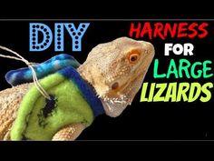 DIY Reptile Harness - YouTube