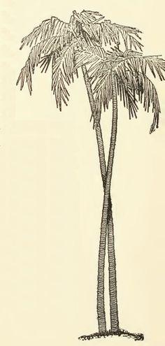 Palm tree drawing