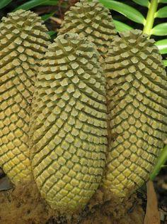 fibonacci | Zara Altair | all galleries >> Plants, Trees & Flowers > Fibonacci