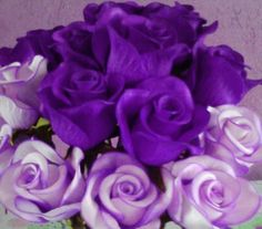 rosas lilases