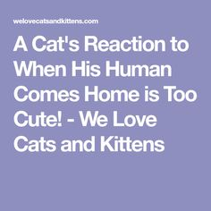 A Cat's Reaction to When His Human Comes Home is Too Cute! - We Love Cats and Kittens