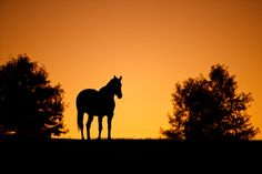 Shelley Paulson Photography | Minnesota Equine Photographer | Horses in Vivid Color Gallery