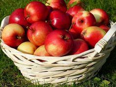 maçãs foto by, francesco francesco