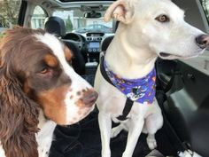 Awesome Pet Sitters Near Me (Increase Pet Happiness by - Cloud Services Lake Elmo, Cottage Grove, Woods, Pets, Awesome, Happy, Animals, Animals And Pets, Animales