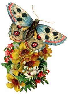 Graphic of the day Vintage Butterfly - The Cottage Market http://www.thecottagemarket.com/freedownloads