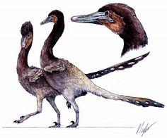 Halszkaraptor | Jed Taylor