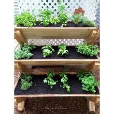 This Weekend Posts And Container Gardening On Pinterest