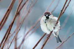 Sparrow by Marco Palmieri on 500px