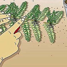 Edelrosen - Die Meisterklasse für den Garten