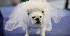 cao vestido de noiva - Google Search